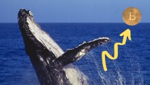 Bitcoin whale moves $310 million cryptocurrency fortune — for just $0.32