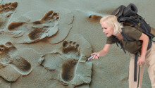 Radar tech reveals unseen footprints of mammoths from the Ice Age