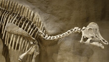 We might've finally found dinosaur DNA, but some scientists don't think it's the real deal
