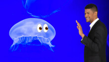 You are more closely related to comb jellies than sponges, new study claims