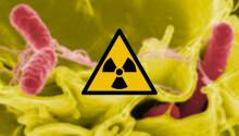 Do space microbes like radioactive waste?