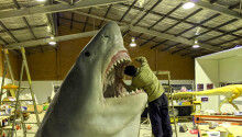 The science behind measuring the biggest shark to ever exist