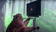 Watch a cyborg monkey play Pong with its mind, thanks to Elon Musk's Neuralink Featured Image