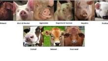 A scientist created emotion recognition AI for animals