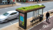 Leicester installs bee-friendly bus stops Featured Image