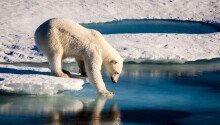 AI tool predicts Arctic sea ice loss caused by climate change Featured Image