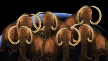 Scientists want to cure elephant herpes so woolly mammoths can stop climate change