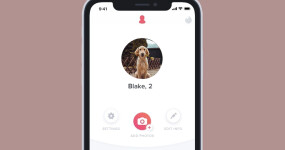 Loyal as a dog — study shows dogs signal commitment in men's dating profiles
