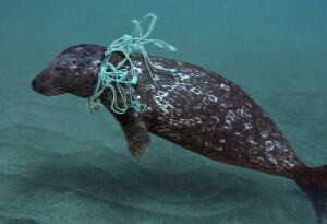These are the plastic items that kill marine animals most often