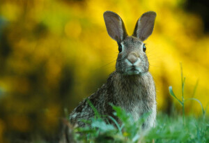 Researchers used AI to determine which overlooked animals could host a new coronavirus