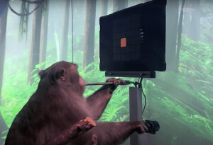 Watch a cyborg monkey play Pong with its mind, thanks to Elon Musk's Neuralink