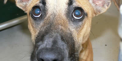 Lost pet? Alert Your Neighborhood Faster with Petline