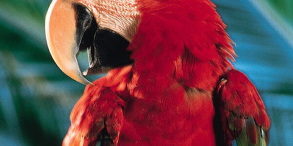 Parrots love to have fun too
