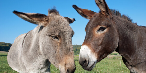 Any travel requests? Ask a mule.
