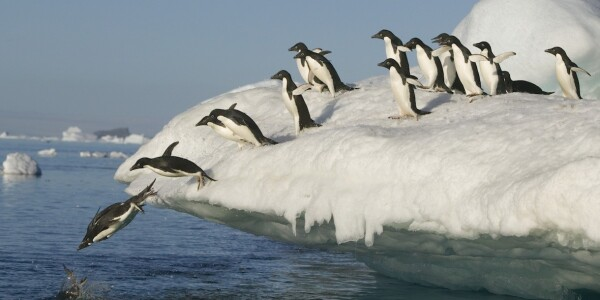 Google's Penguin is flapping again – but what about the much-feared guest post penalty?