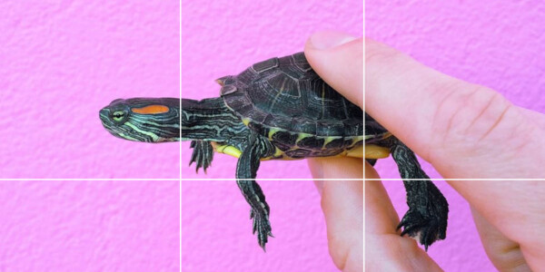 #TurtleTuesday on Instagram is your new weekly cute fix