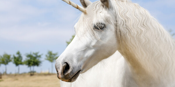 Are unicorns on the verge of extinction?