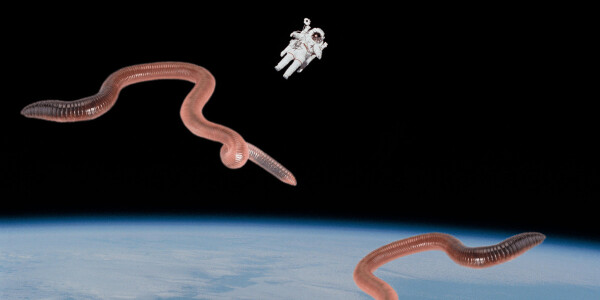 Here's why NASA is sending worms to space