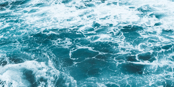 Study: Ocean ecosystems take 2 million years to recover after mass extinction