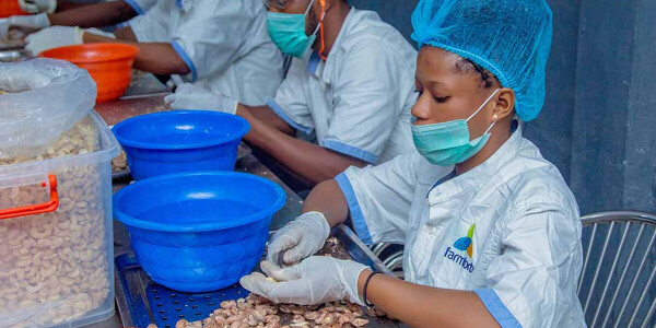 How affordable agricultural technology is solving food insecurity in Nigeria