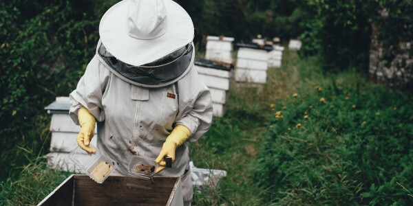 Honey bees are dying — but man-made hives could save them