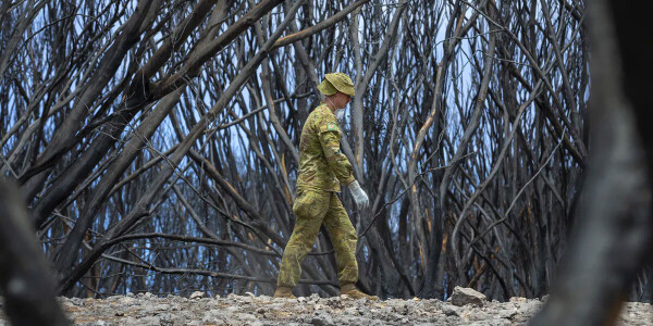 Australian bushfires didn't just destroy specific species, but entire ecosystems