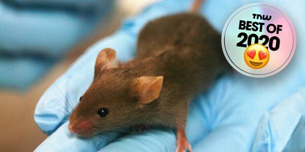 Researchers found a cure for diabetes (in lab mice)