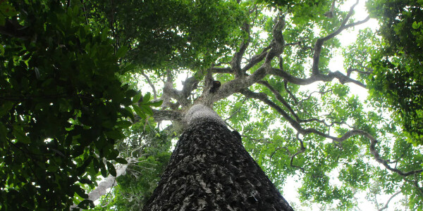 Amazon trees are actually organic time capsules for human history