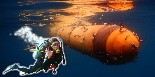 This cute lil' underwater drone just spent 4 years ~ v i b i n g ~ in the Atlantic