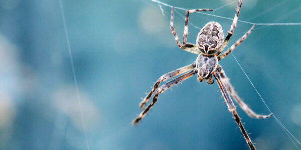 Spider legs build webs without the brain's help — and could inspire robot limbs