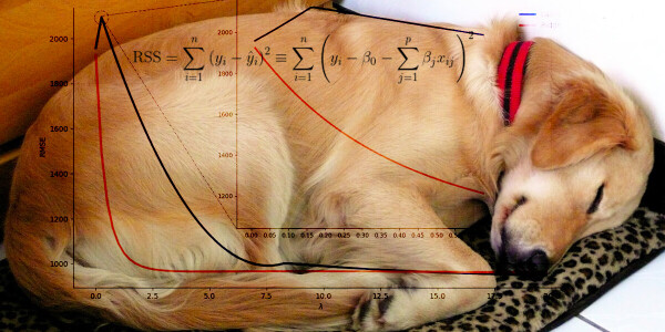 How to turn your dog's nap time into a regularized linear model