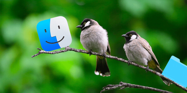 This adorable macOS extension names new folders after birds