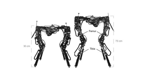 This shape-shifting robot adjusts its body to walk across all kinds of terrain