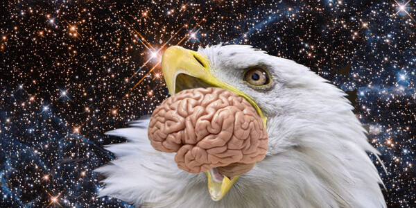Neural's Mind Blowers: How quantum bird brains could give us superpowers