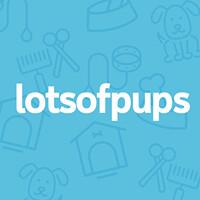 lotsofpups.com