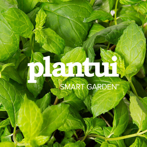 Plantui