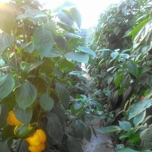 Asclepius Farms