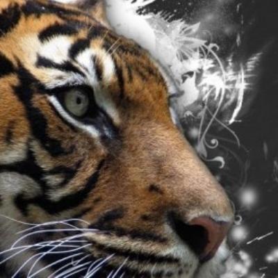 TigerALERT