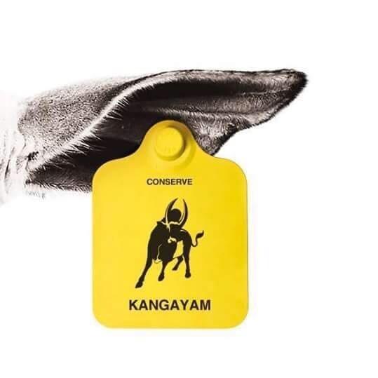 Senapathy Kangayam Cattle Research Foundation